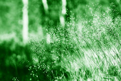 Summer vivid grass blades in daylight background Royalty Free Stock Image