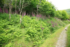 Summer walk. View of a pathway through woodland covered in wildflowers Royalty Free Stock Photography