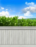 Summer wall background/backdrop Royalty Free Stock Image