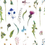 Summer watercolor seamless floral pattern with wild flowers Stock Photography