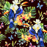 Summer watercolor seamless pattern with toucan, butterflies Royalty Free Stock Image
