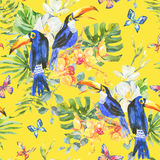 Summer watercolor seamless pattern with toucan, butterflies Royalty Free Stock Images