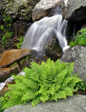 Summer waterfall with fern Stock Photo