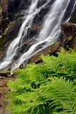 Summer waterfall with fern. Summer waterfall in the Giant mountains (Czech Republic royalty free stock photos