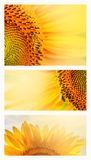 Summer web banner or backgrounds with sunflowers Stock Photography