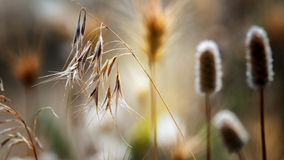 Summer weeds. Dried out weeds in macro royalty free stock photos