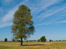 Summer on the West Plains 2. Summer trees on a wispy cloud filled blue sky Stock Photos