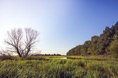 Summer wetland river countryside lush green wood landscape at sunrise stock photos