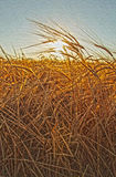 Summer Wheat Field. And Sun Royalty Free Stock Photos