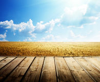 Summer wheat fieldn floor Stock Photo