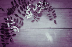 Summer white flowers on vintage wooden background Royalty Free Stock Image