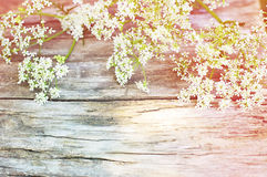 Summer white flowers on wooden background Stock Photography