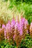 Summer wild field flowers. Stock Photography