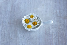 Summer wild flower camomile in the small sauceboat Royalty Free Stock Photos