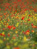 Summer wild flower meadow Royalty Free Stock Images