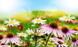 Summer Wild Flowers Background Royalty Free Stock Images