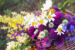 Summer Wild Flowers Stock Images