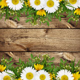 Summer wild flowers edge Stock Image