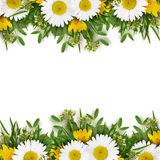 Summer wild flowers edges Royalty Free Stock Image