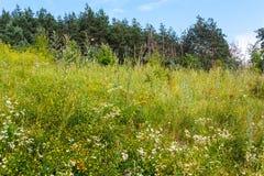Summer wild flowers Stock Image