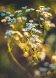 Summer wild flowers Royalty Free Stock Photos
