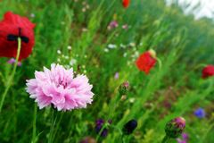 Summer wild flowers profusion Royalty Free Stock Images