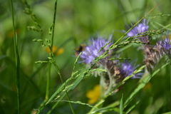 Summer wild flowers Royalty Free Stock Photography