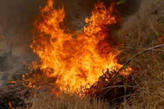 Summer Wildfires Burning In The Forest At Rural Area Of Khon Kaen,Thailand. Stock Image