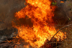 Summer Wildfires Burning In The Forest At Rural Area Of Khon Kaen,Thailand. Stock Photos