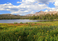 Summer wildflower landscape in the Uinta mountains. Royalty Free Stock Images