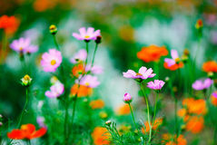 Summer wildflowers. Closeup of colorful summer wildflowers royalty free stock images