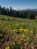 Wildflowers and Mountain peak Royalty Free Stock Photo