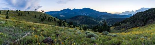 Summer Wildflowers east of the Peaks Stock Image