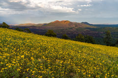 Summer Wildflowers east of the Peaks royalty free stock photos