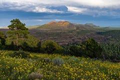 Summer Wildflowers east of the Peaks Royalty Free Stock Image