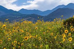 Summer Wildflowers east of the Peaks royalty free stock image