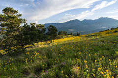 Summer Wildflowers east of the Peaks stock image