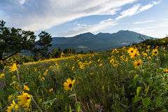 Summer Wildflowers east of the Peaks stock photo