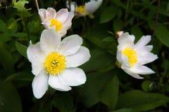 Summer Wildflowers - fleld flowers Stock Images