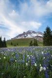 Summer wildflowers on Mt. hood, Oregon. Summer wildflowers on Mt. hood in the cascade range of Oregon Royalty Free Stock Photos