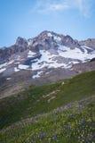 Summer wildflowers on Mt. hood, Oregon Stock Photo