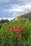Summer wildflowers with a rainbow. Stock Photo