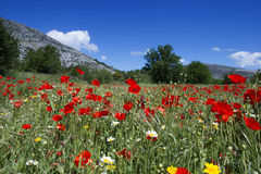 Summer wildflowers royalty free stock photography