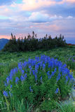 Summer wildflowers at sunset. Royalty Free Stock Photos