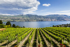 Free Summer Winery View Stock Images - 64688574