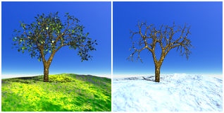 Summer and winter tree Royalty Free Stock Photos