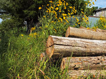 Summer Wood and Weeds. A pile of cut timber surrounded by brightly colored vegetation on a farm in south central Kentucky Royalty Free Stock Images