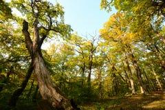 Free Summer Woodland Scenary With Blue Sky Stock Photos - 212274823
