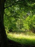 Summer woodlands Stock Image