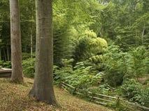 Summer Woods Stock Photo